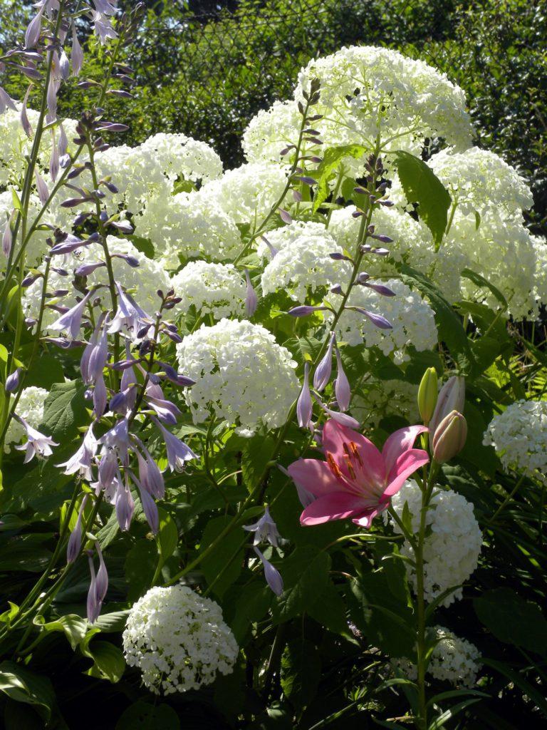 ogródek moja miłość