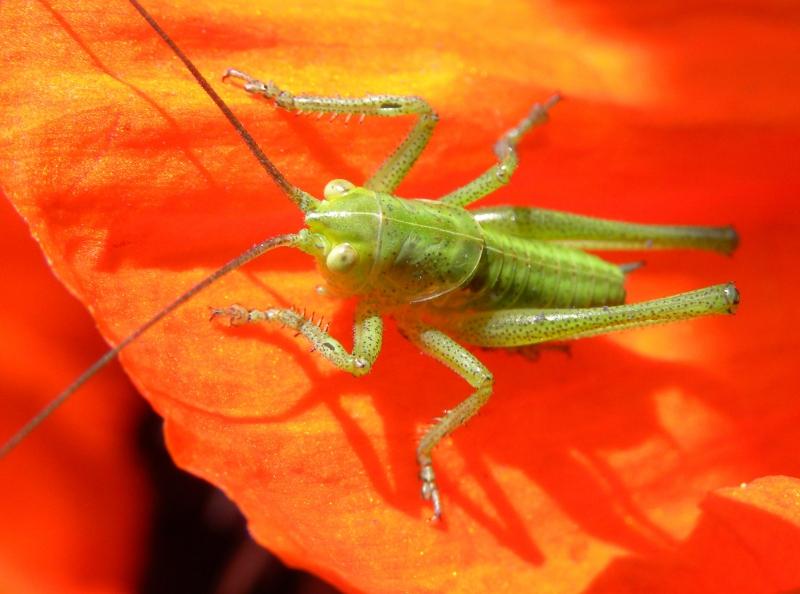 lato owadów