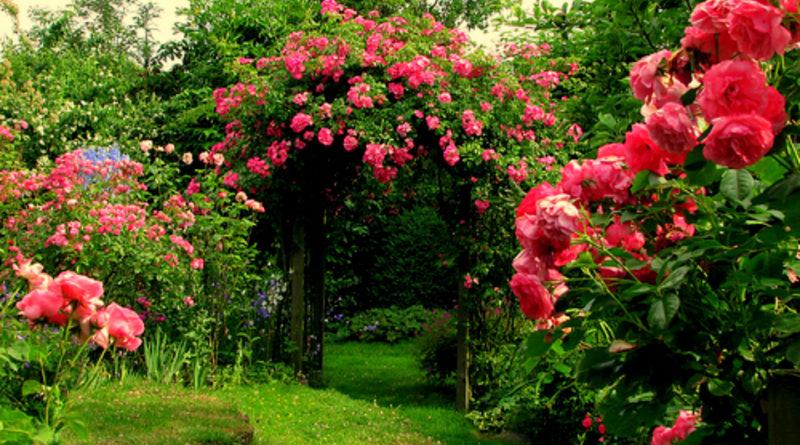 moja działka i mój ogród