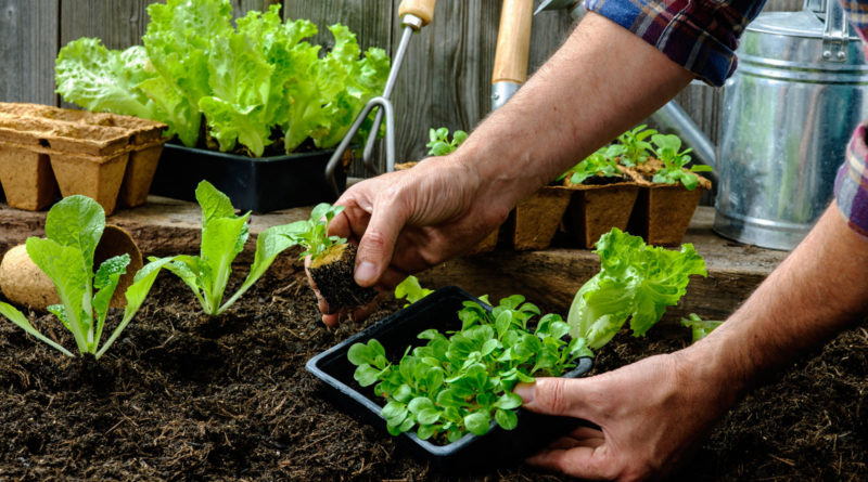 użytkownicy ogródków ROD