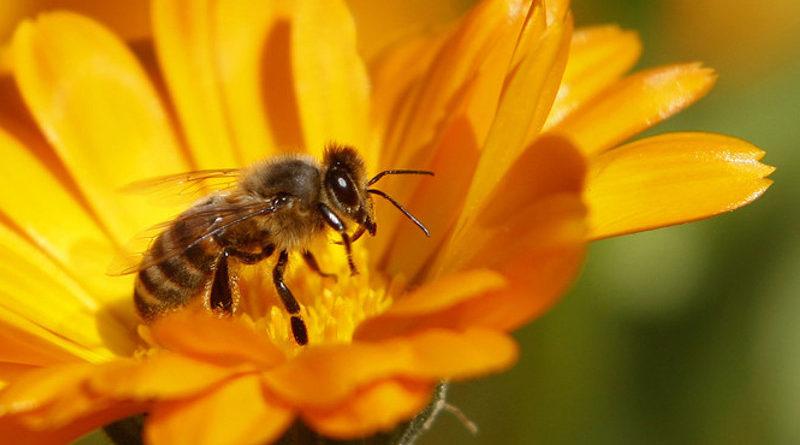 ogród pszczoły
