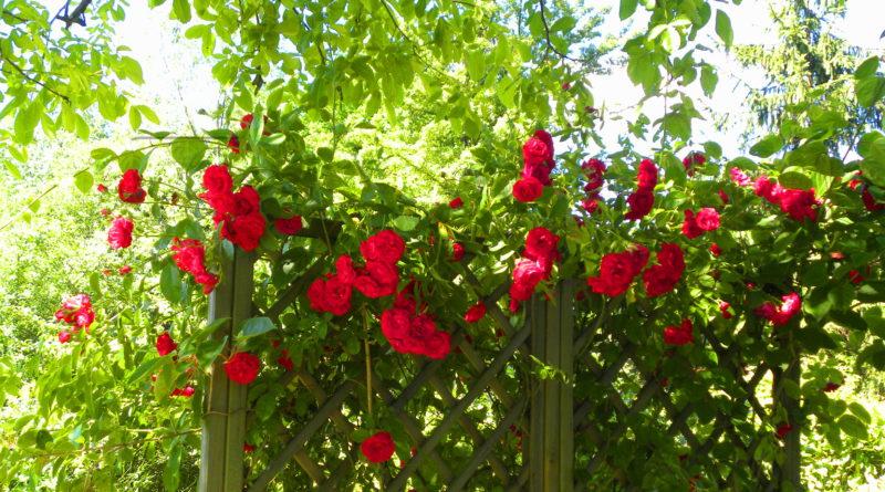 pielęgnacja ogródek