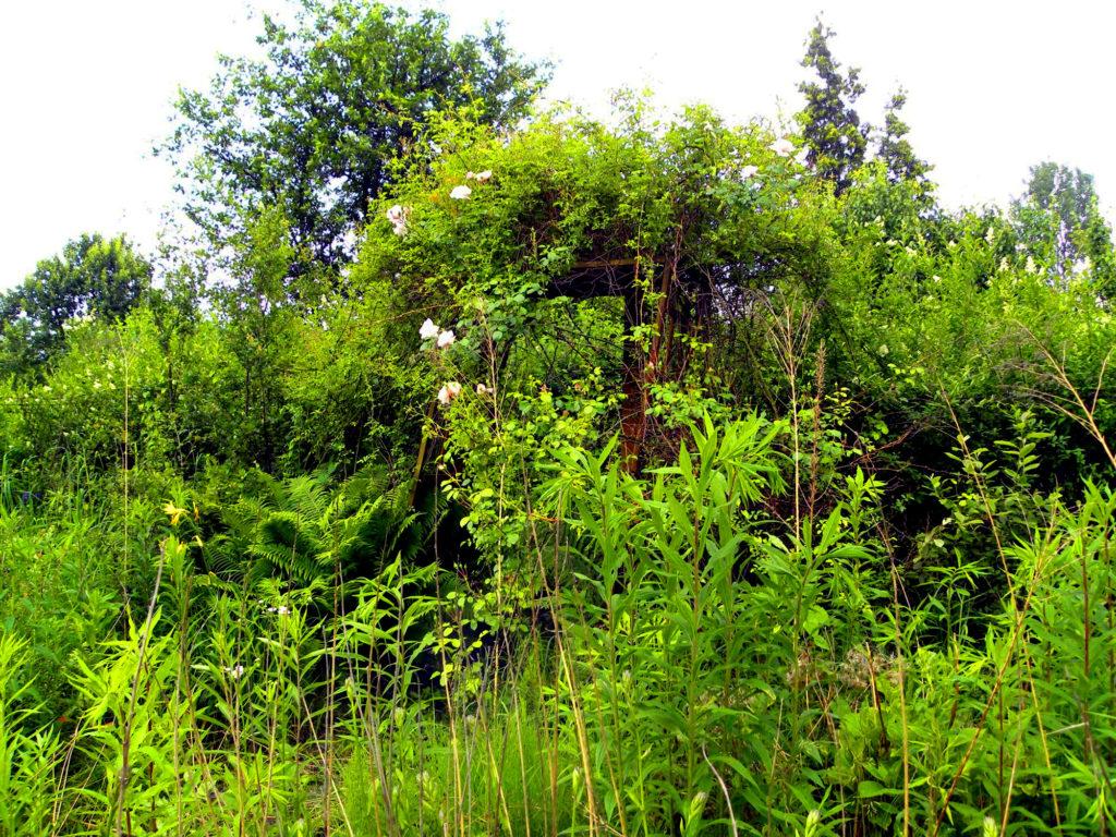 zaniedbany ogród