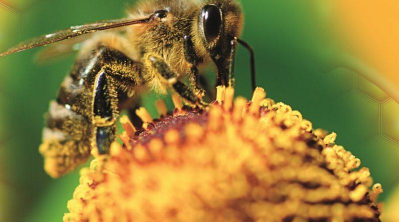 Wielki Dzień Pszczoły