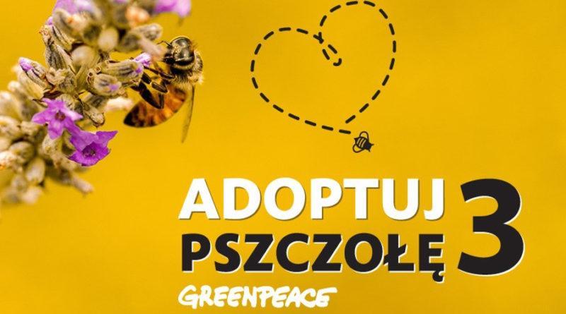 adoptuj pszczoły 3