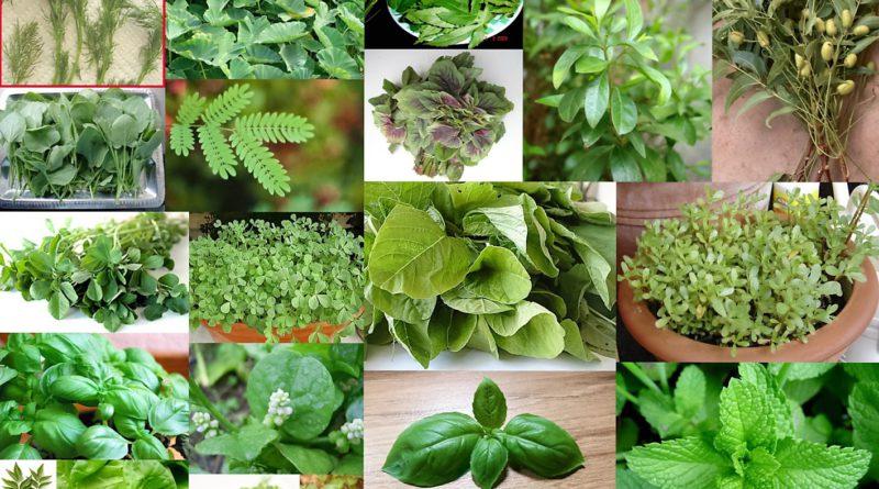 jednolita baza danych roślin leczniczych